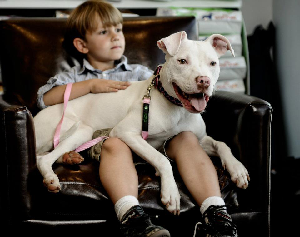 american-pit-bull-foundation-01