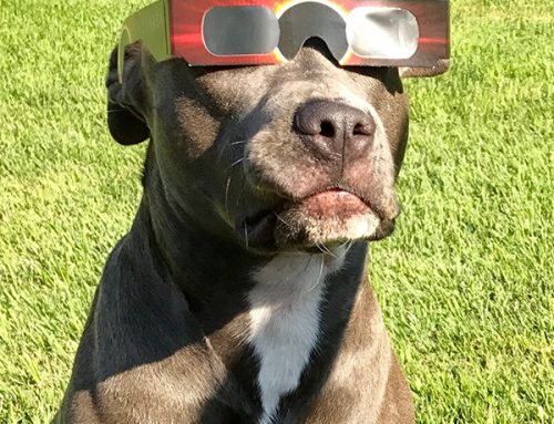 Solar Eclipse Preparation for Dog Owners